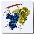 Carrelage - Les fruits - Nom du décor - Motif - Design - Faïence de Provence à Salernes