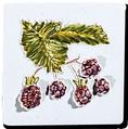 Carrelage - Décoration - Les fruits- Motif - Design - Faïence de Provence à Salernes