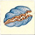 Carrelage - Décoration - Coquillage B - Motif - Design - Faïence de Provence à Salernes